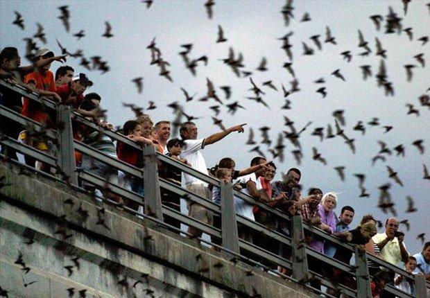 Buffalo Bayou Bats_620x430.jpg