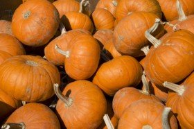 PileOPumpkins