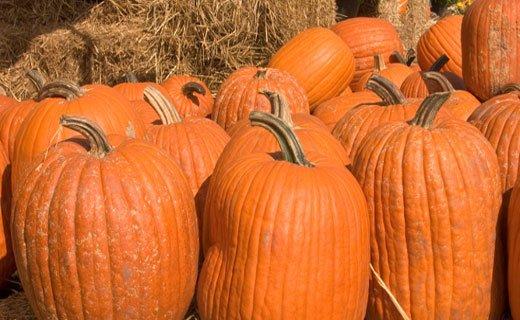 Pumpkins-520x320