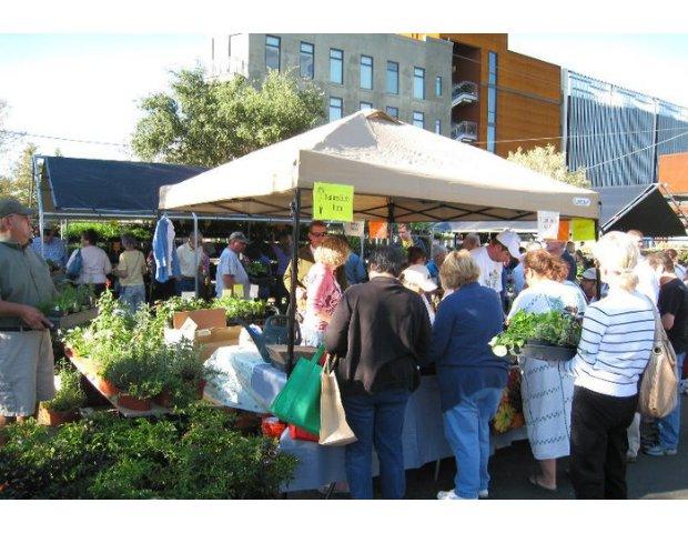 San Antonio Herb Market 7.png