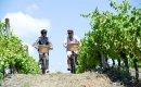 Classic New Zealand Wine Trail