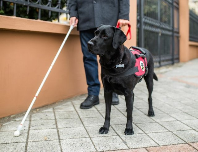 What are the Benefits of Having a Service Dog?