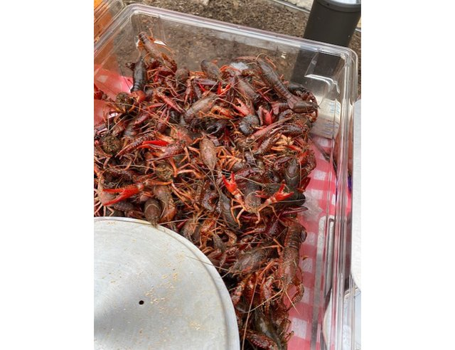 Crawfish Boil at The Village at Sugar Land 6.png