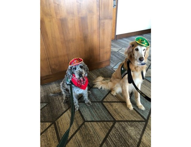Virtual Wags & Whiskers Brunch 2021_Rebel & Friend ready to party.png